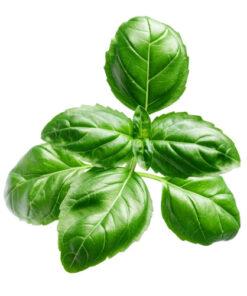 óleo essencial de manjericão doTerra folhas